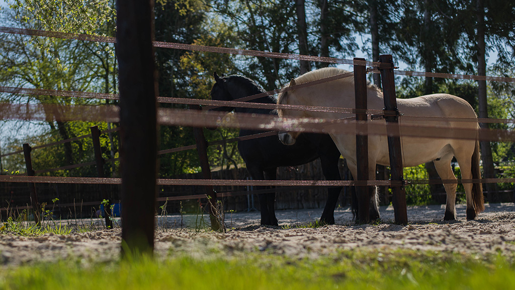 Dwingeloo, Equine Serenity horsemanship & coaching, coach, paardencoach